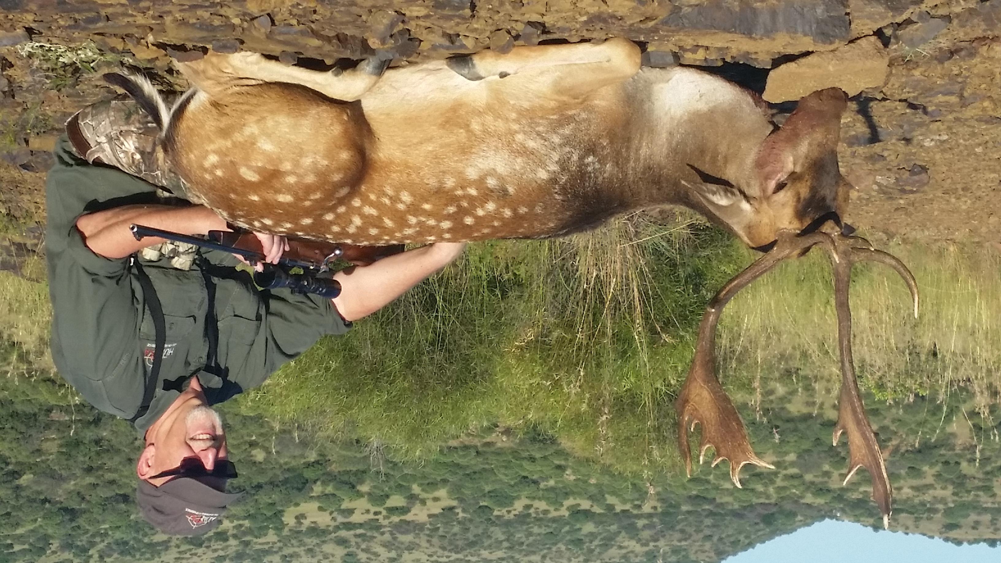 Fallow Deer- Brad Rauch 2017