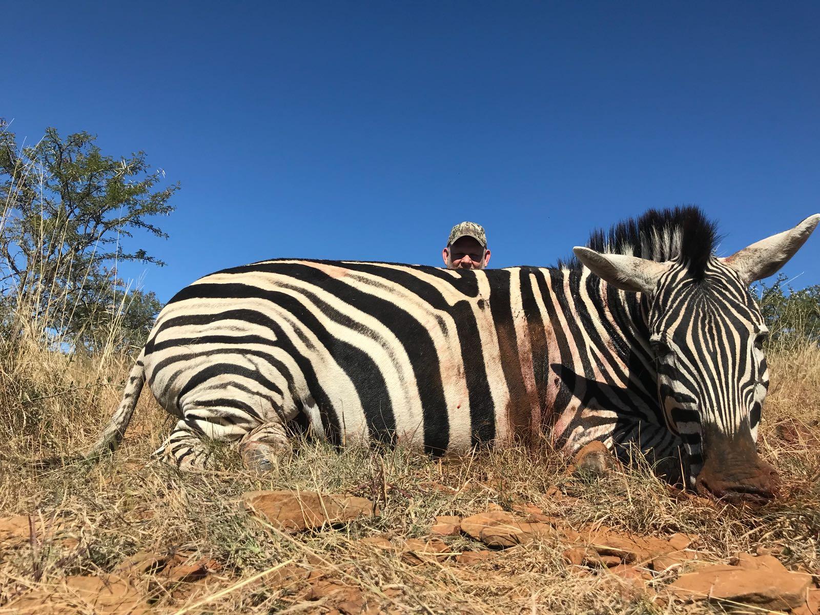 Alan Fitzsimmons Zebra 2018