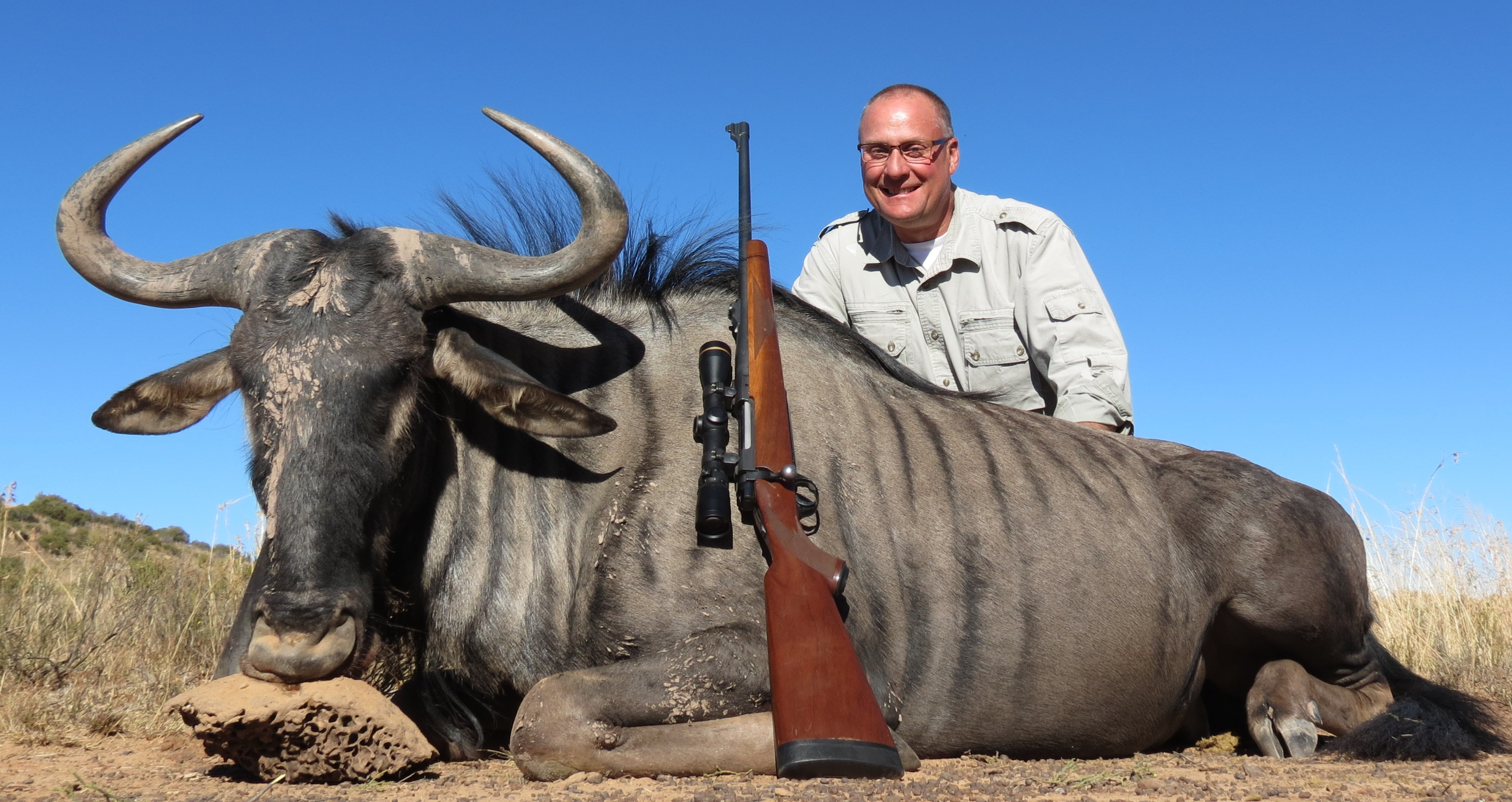 Blue Wildebeest Tom Reilly 2015