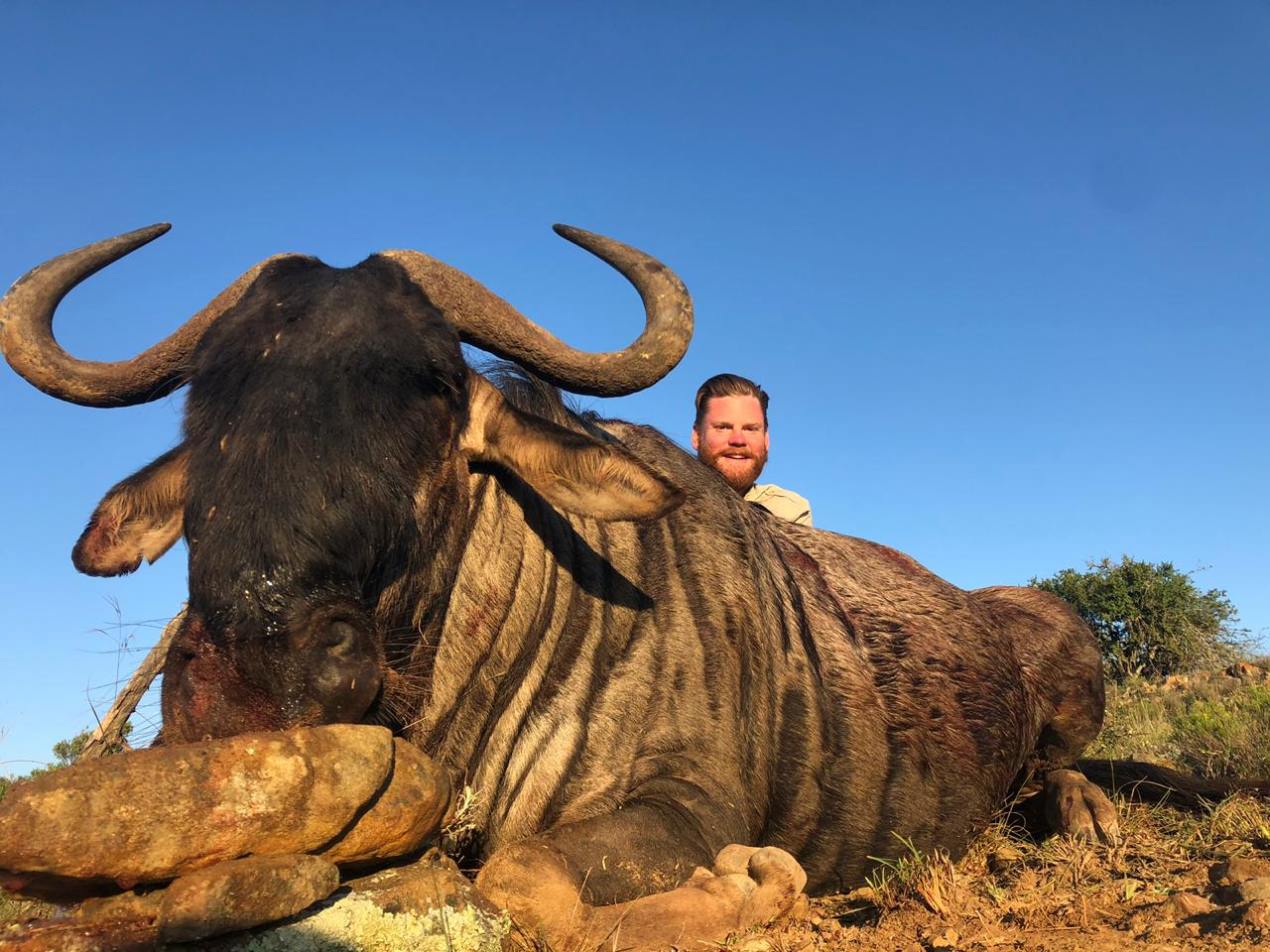 Marcus Bowen Blue Wildebeest 2019
