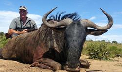 Blue Wildebeest- Johann Lotz 2017