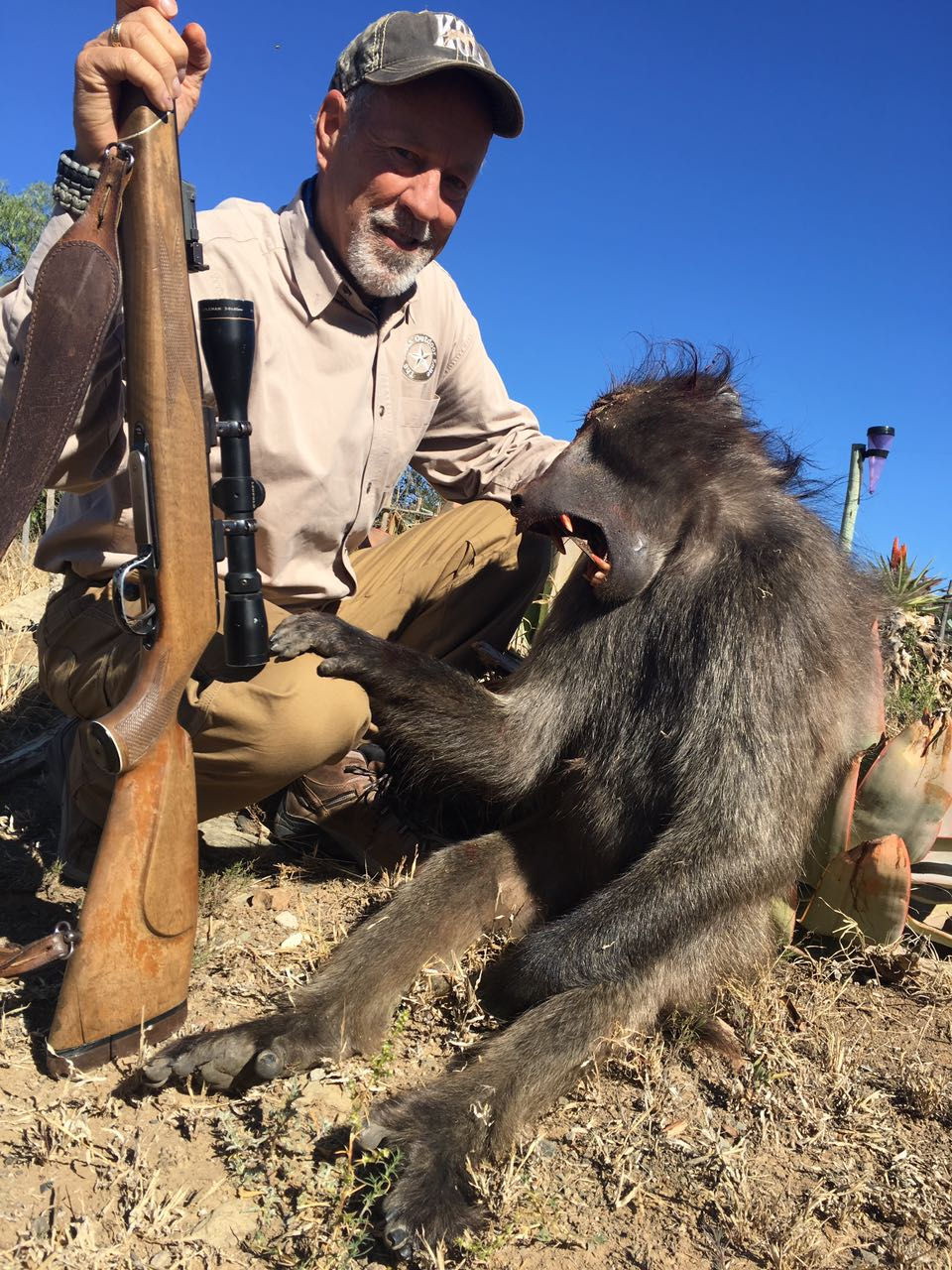 TJ Greaney Baboon 2017