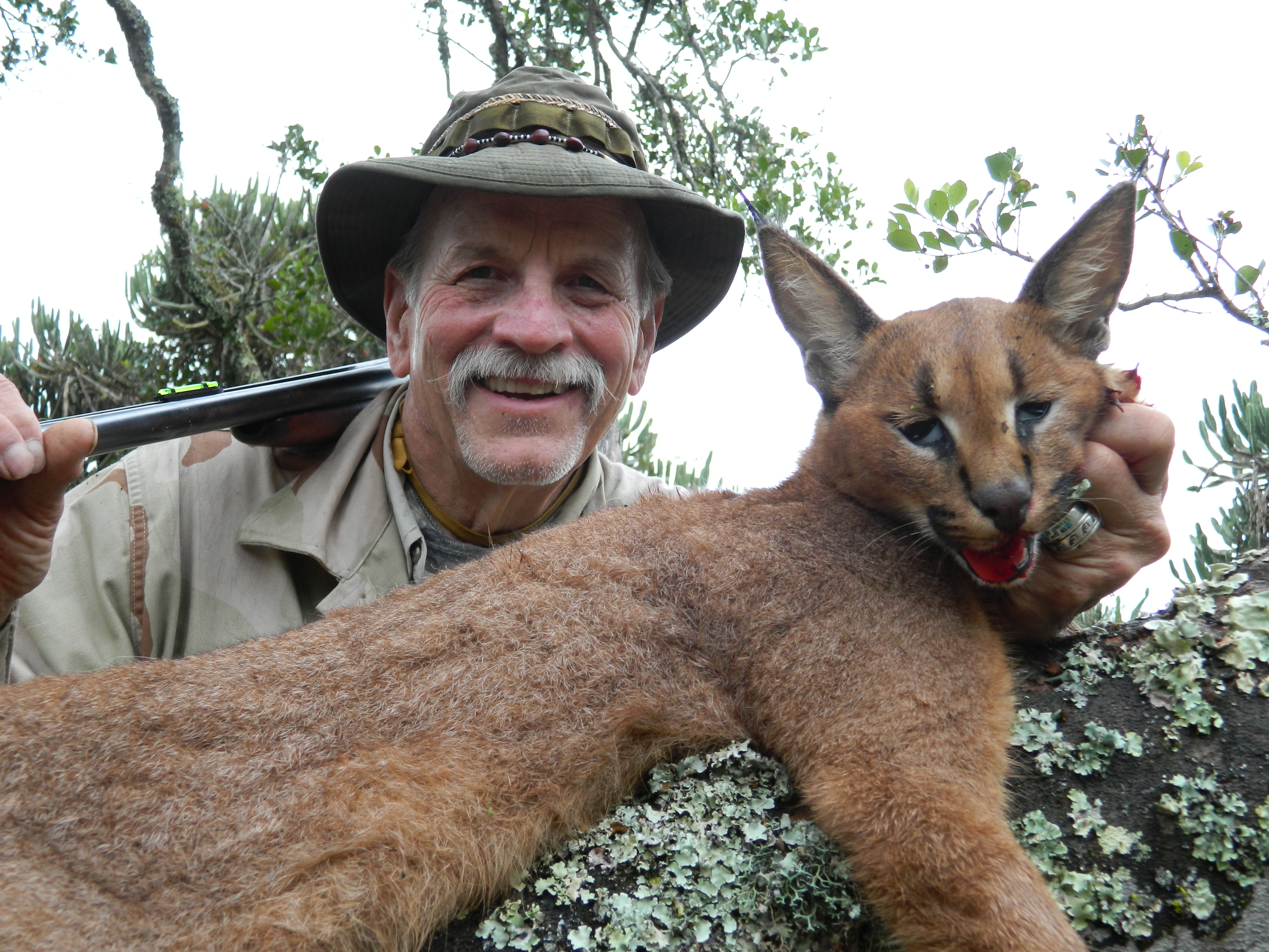 Caracal  Peter Drowne 2014
