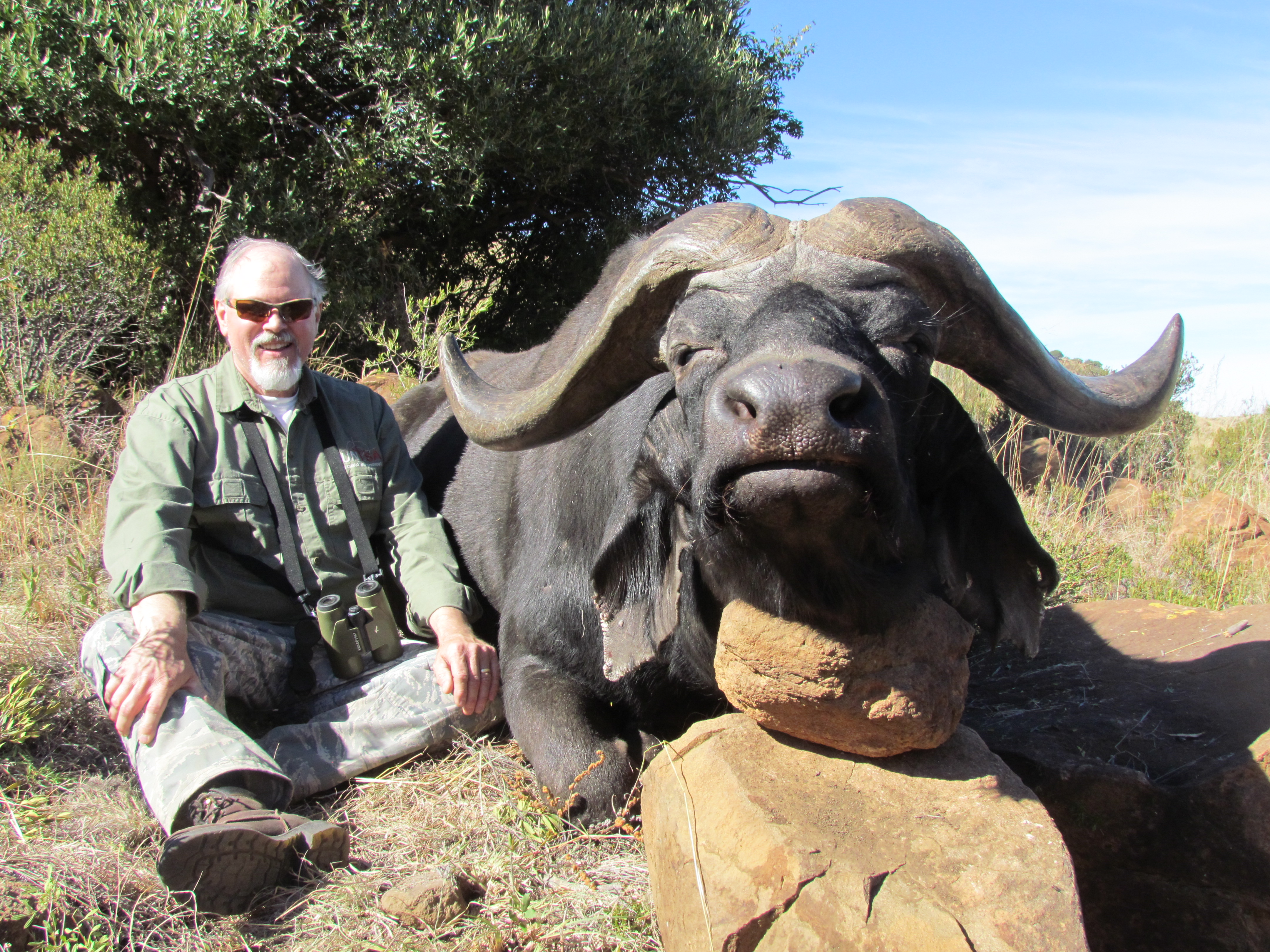 Cape Buffalo Alvin Wright 2014