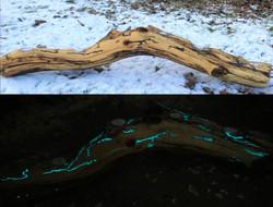 """Storm"" Driftwood candle holder 900sek"