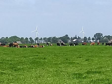 Op bezoek bij een echte Blaarkop-koeienboer
