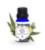 1_bouteille_eucalyptus.png