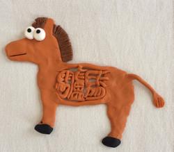 思っている驢馬