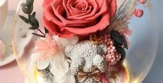 Precious Bear - Pink