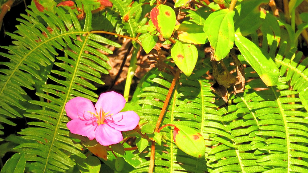 hawaiian flower and ferns