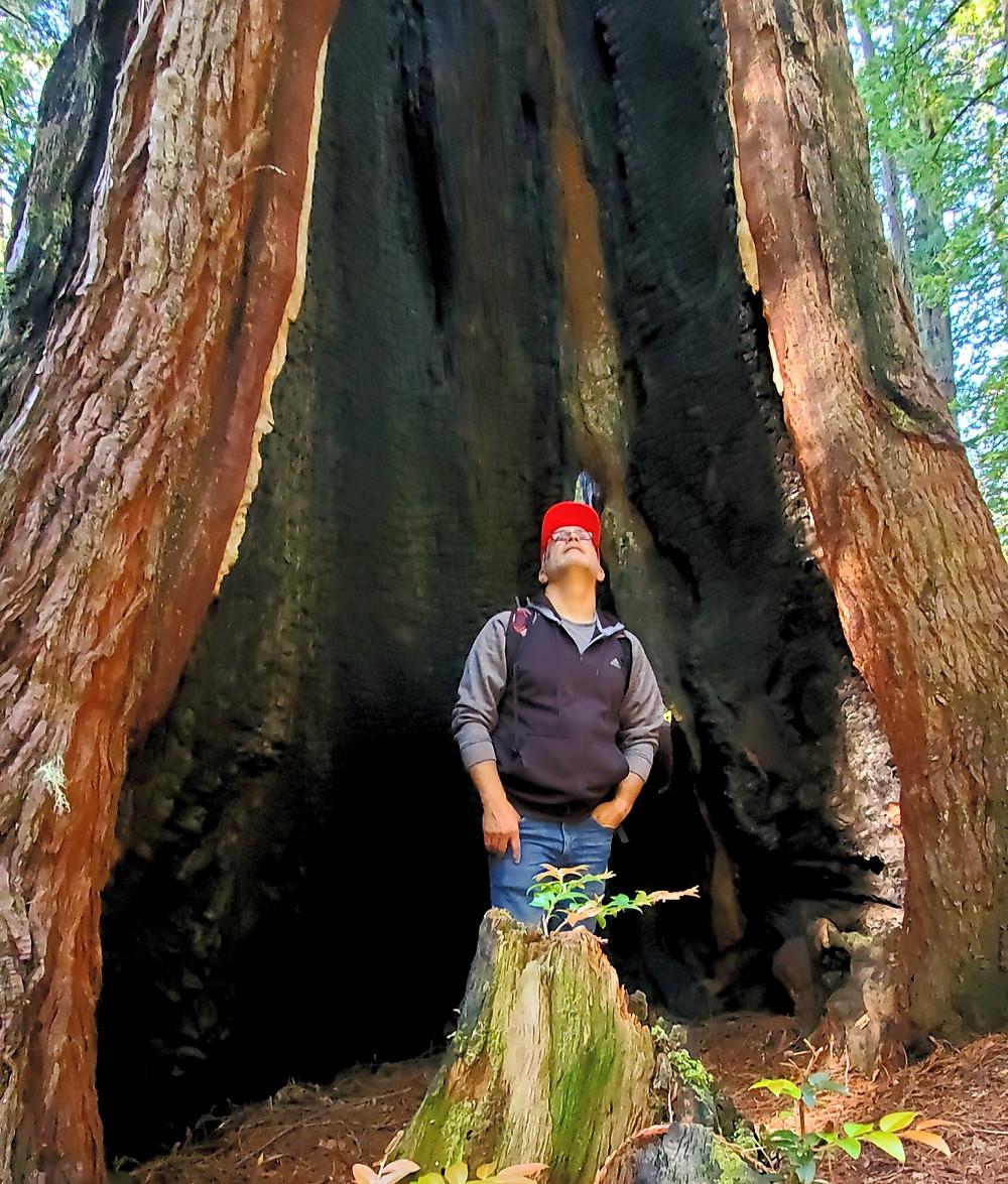 hollow burnt redwood tree