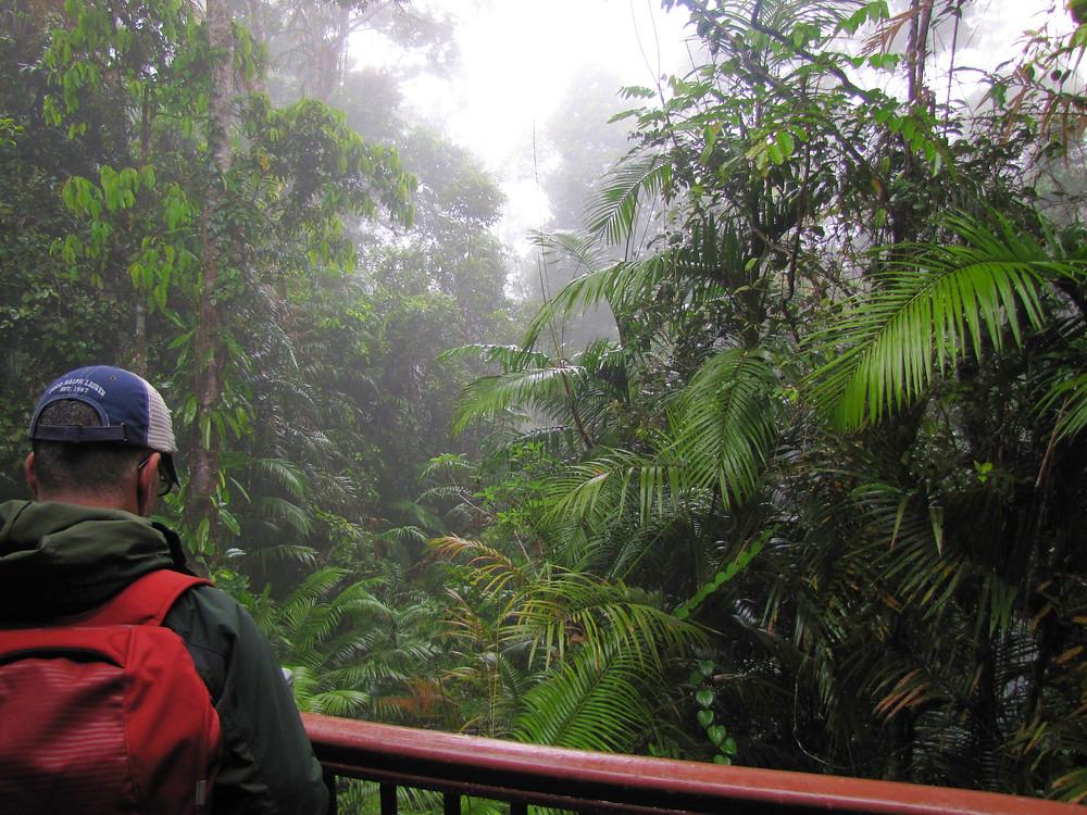 australian cloud rainforest