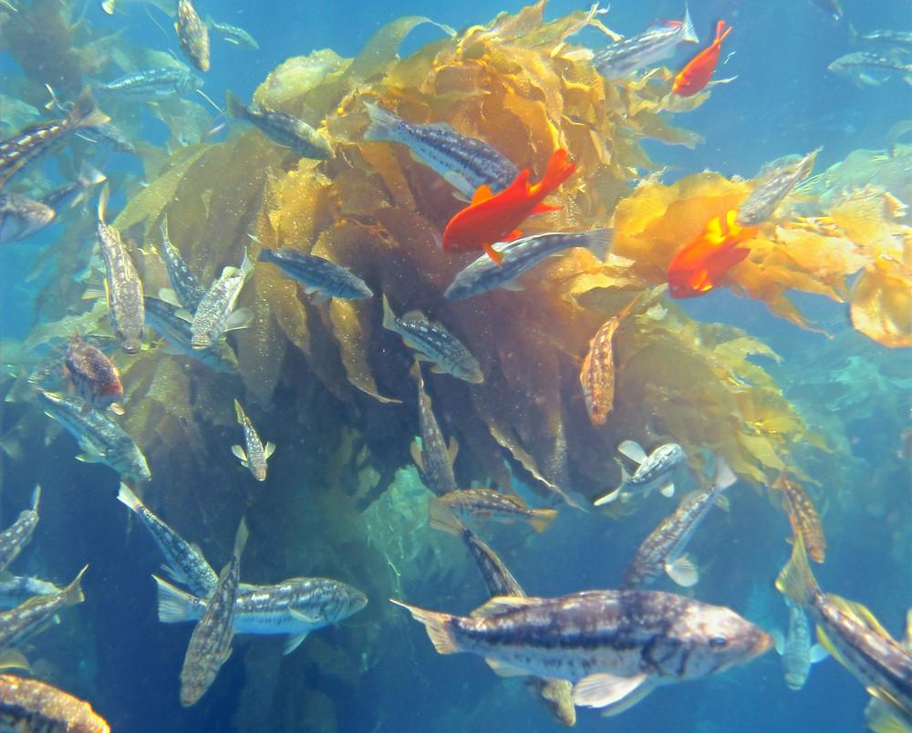 catalina island snorkeling underwater