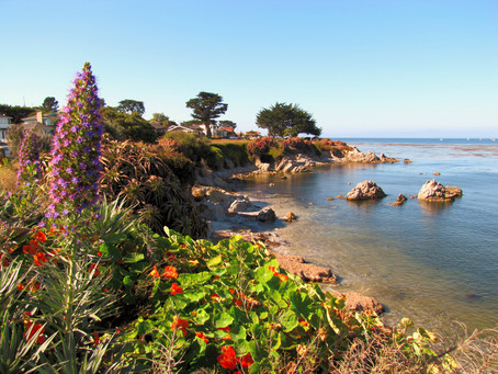 Must Do Activities in and around Pacific Grove, CA