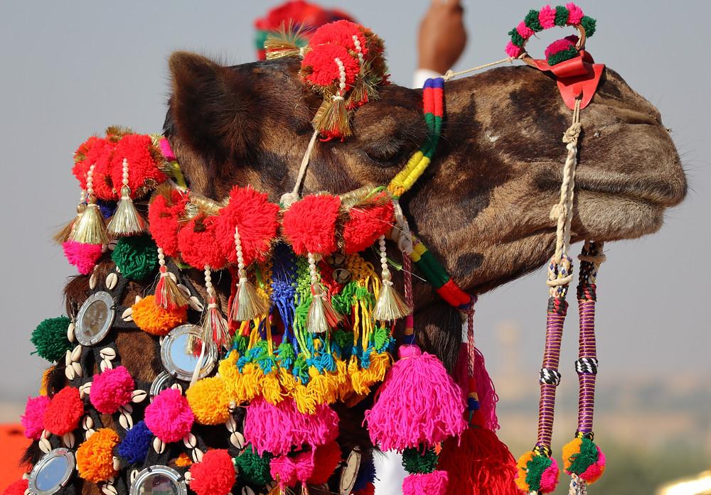 decorated camel jaisalmer