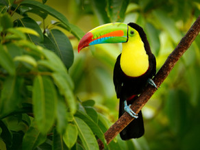 The Best Place for Wildlife in Costa Rica