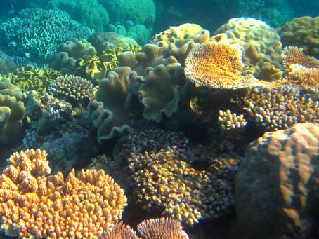 Australia - Far North Queensland