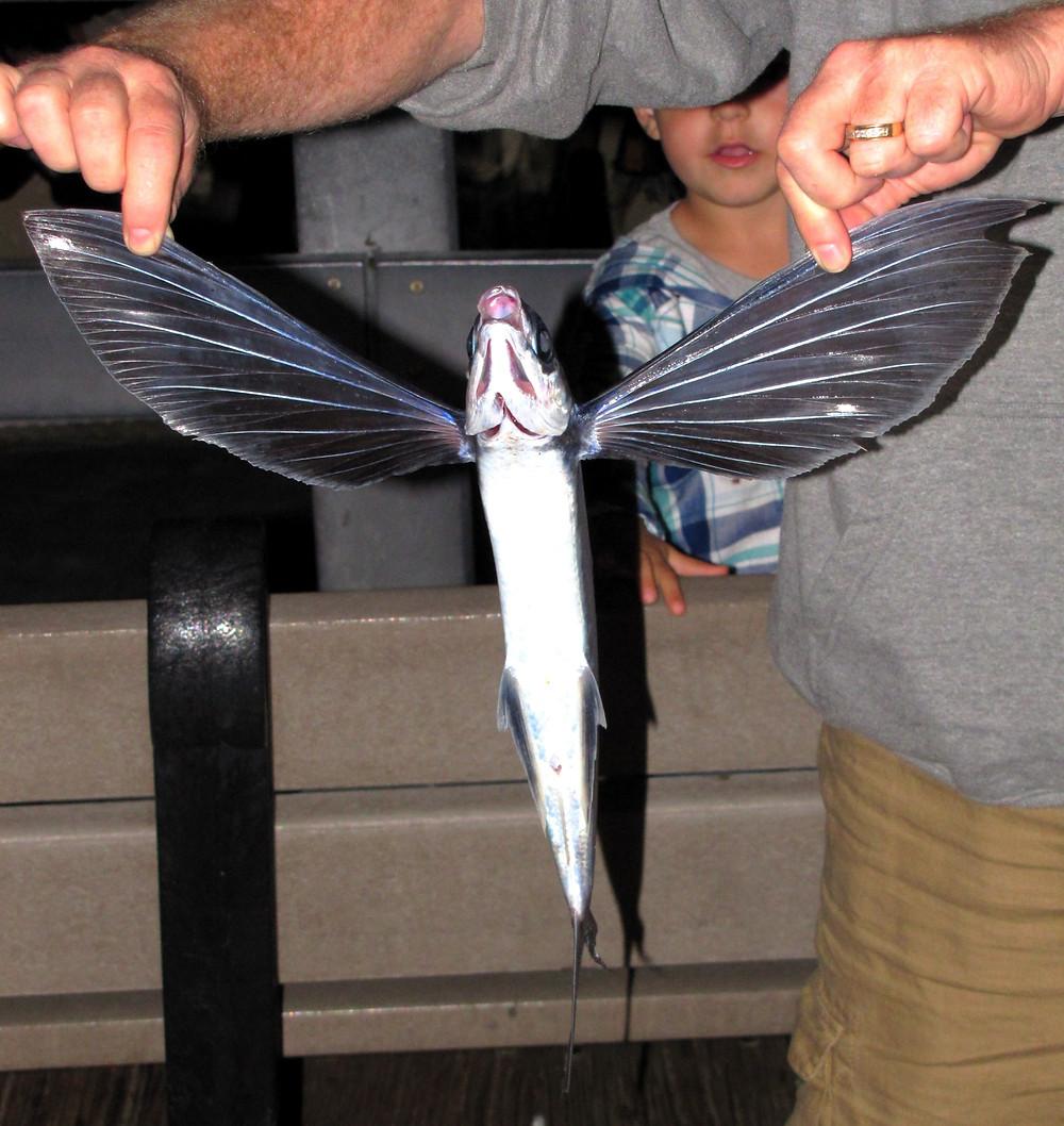 flying fish catalina island