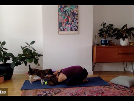 Video: Introducing Tiny the Dogga