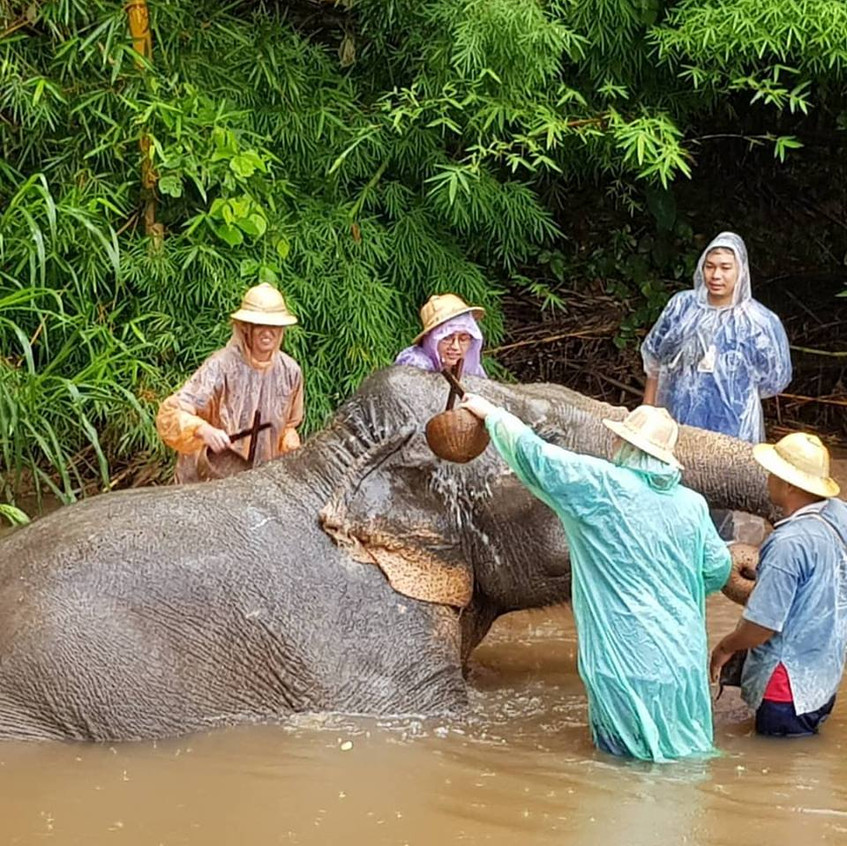 Thai Elephant 1