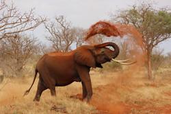 elephant-111695