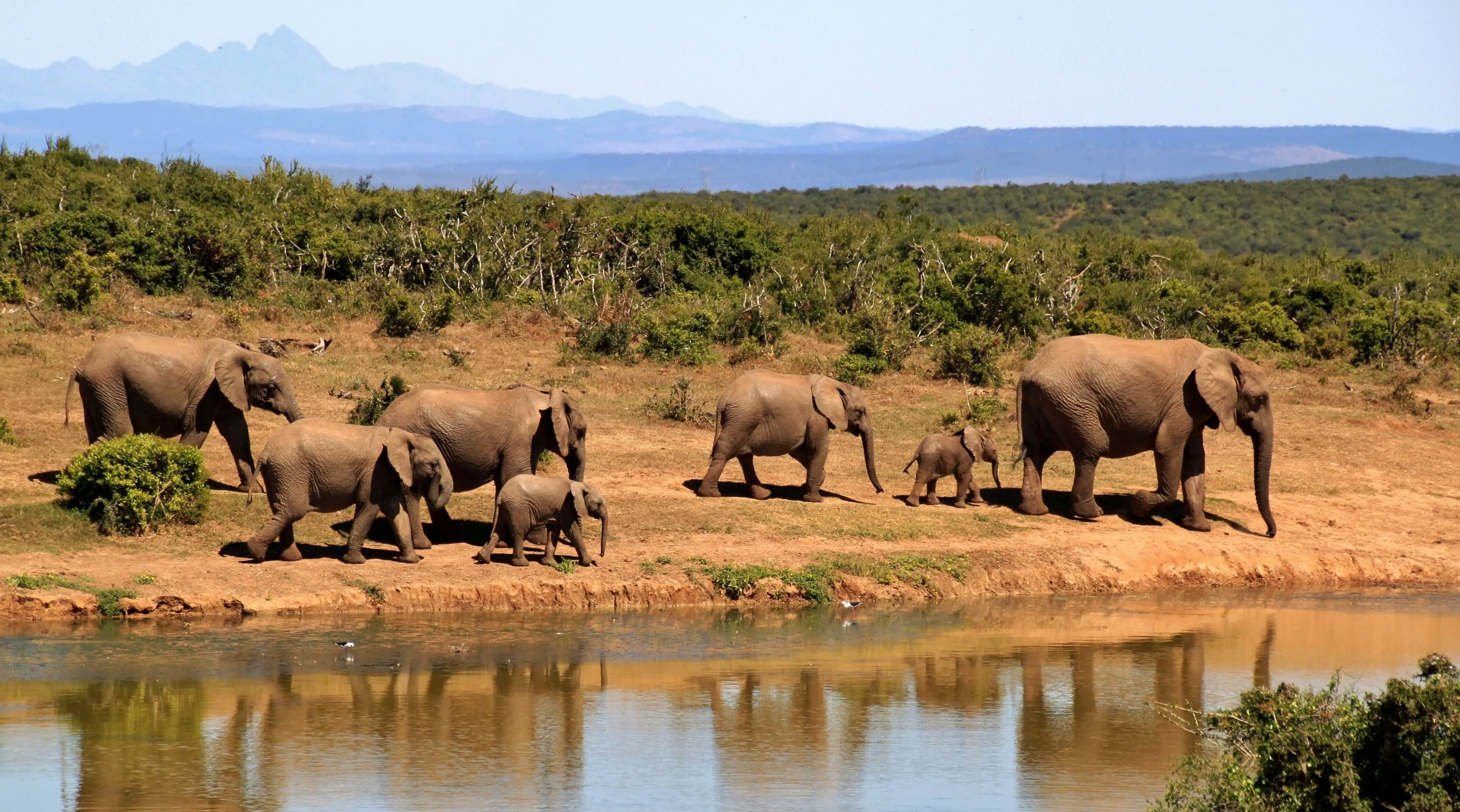 elephant-279505