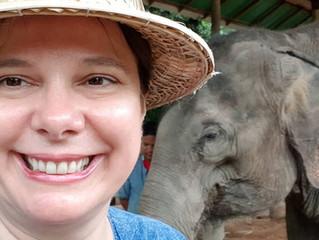 Thai Elephant Care Center