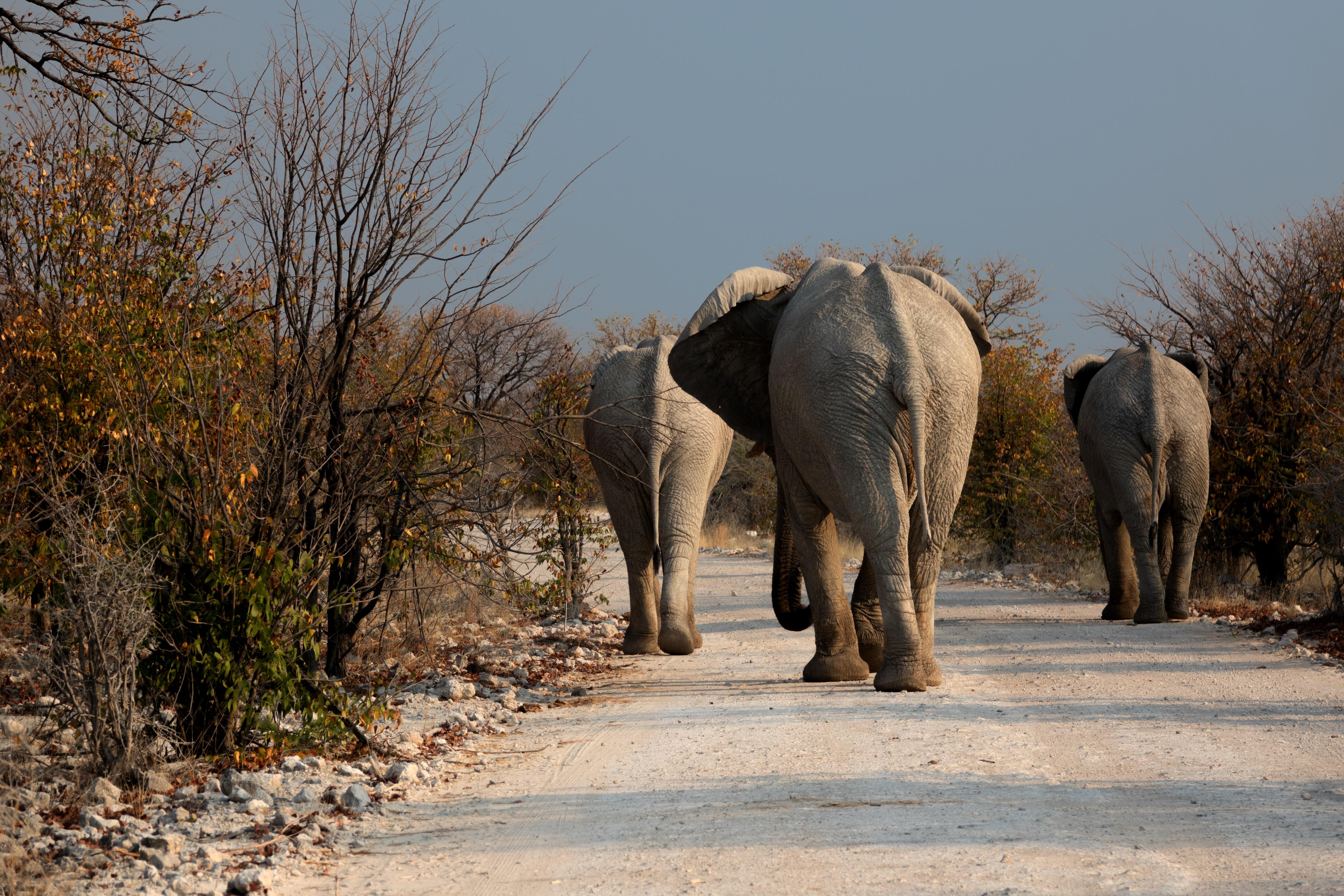 elephant-1915659