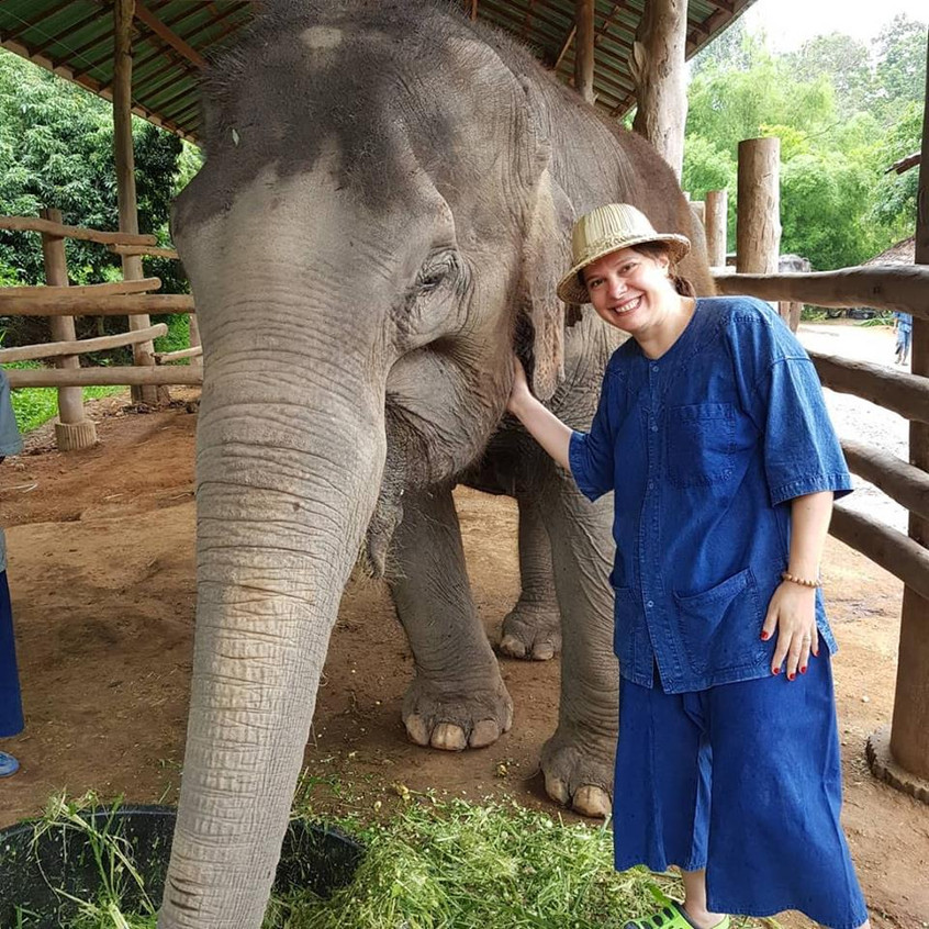 Thai Elephant 5