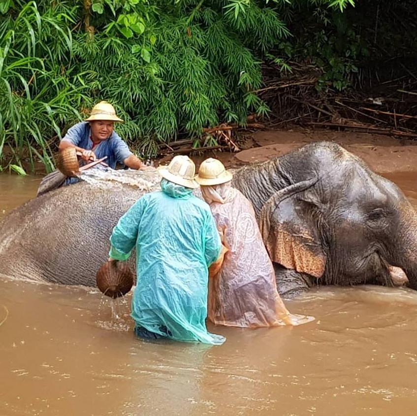Thai Elephant 2