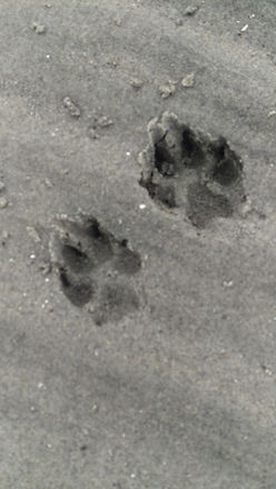 Keepers paws sand.jpg