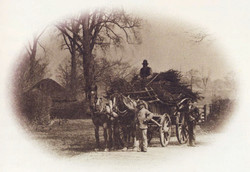 Men Working in the Field 11
