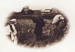 Children Working in the Field 3