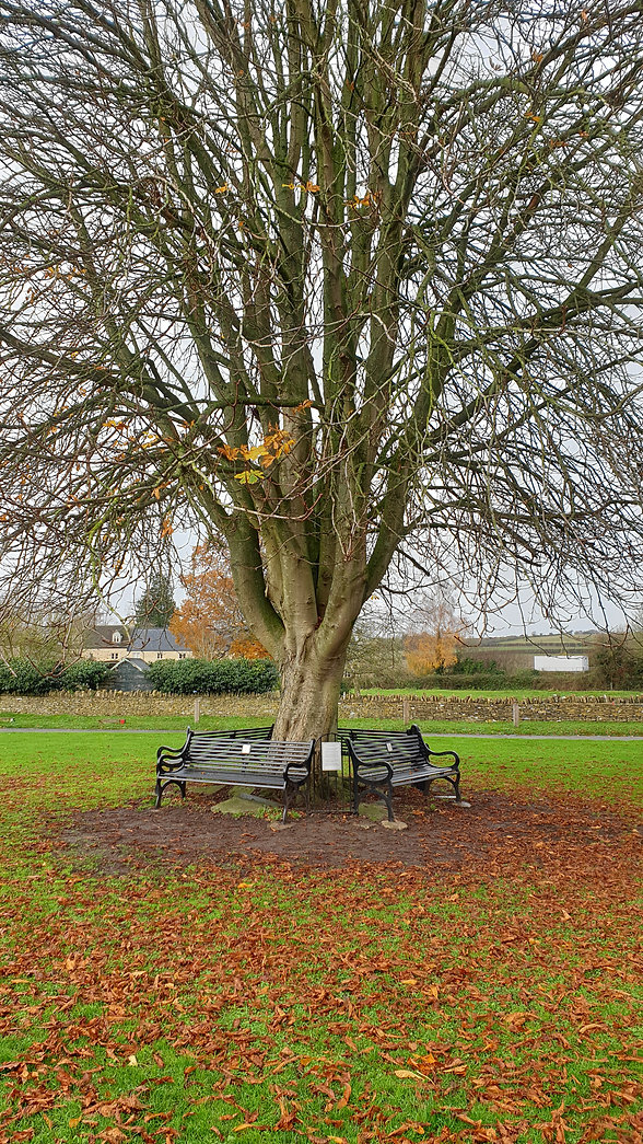 Benches and tree.jpg