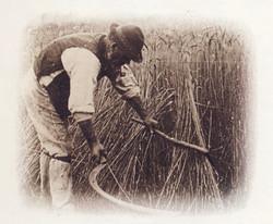 Men Working in the Field 10
