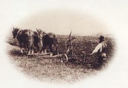 Men Working in the Field 5