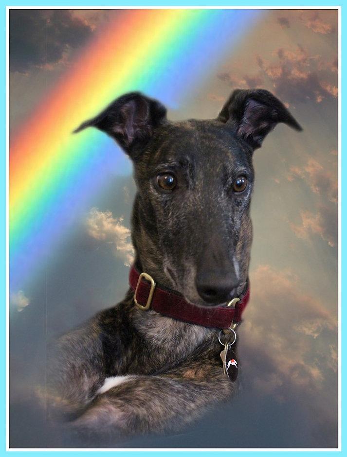Tommy rainbow.jpg