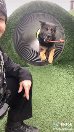 A typical day in the K9 unit!