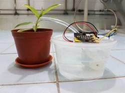 Auto Plant Watering Project - Main Pictu