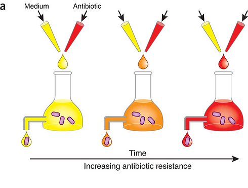 The-morbidostat-applies-a-continuous-selective-pressure-to-the-bacterial-population-a_edited.png