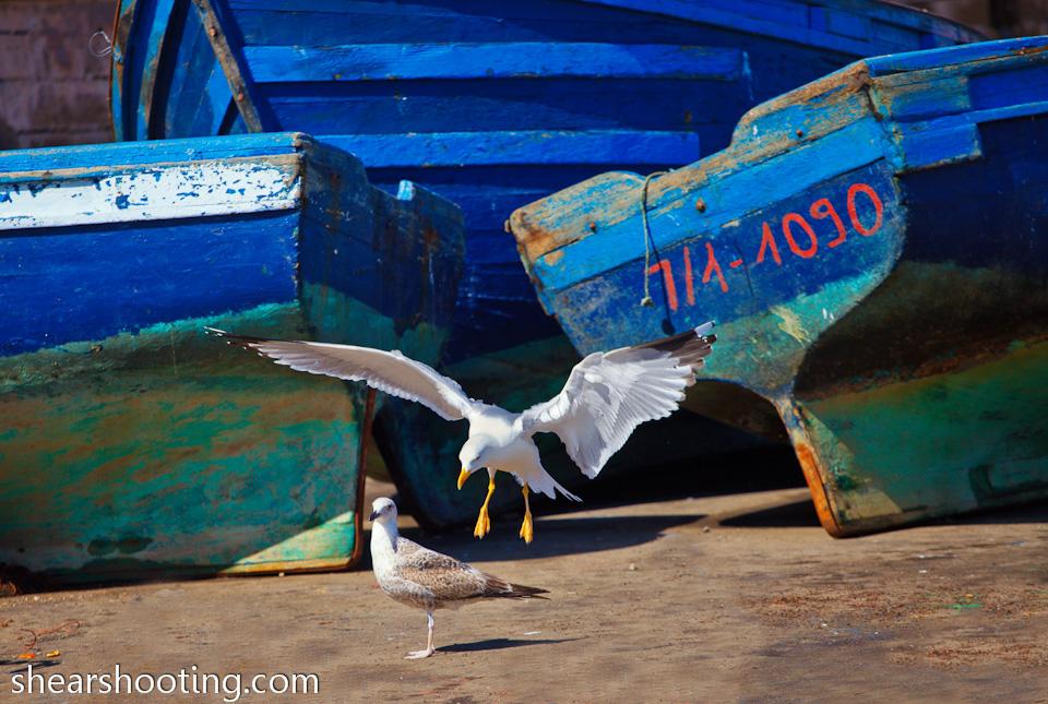 Morocco_ewanshears+(129).jpg