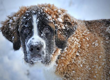 Parlons du toilettage l'hiver !!!