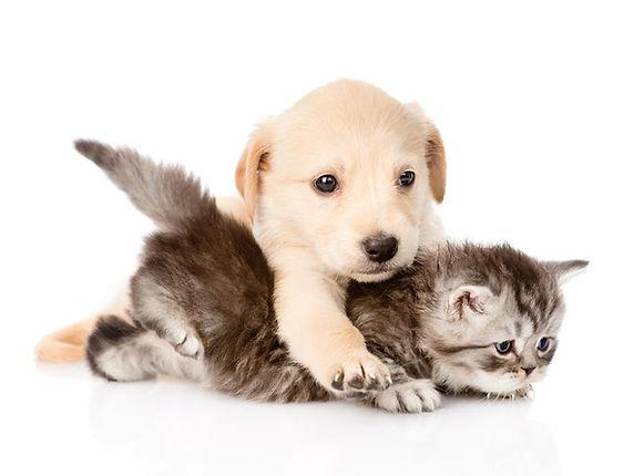 chien et chat qui joue, dogma