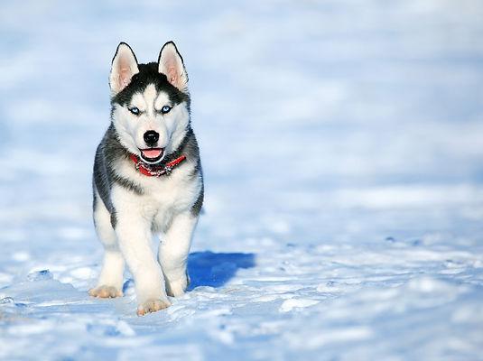 chien dans la neige, dogma