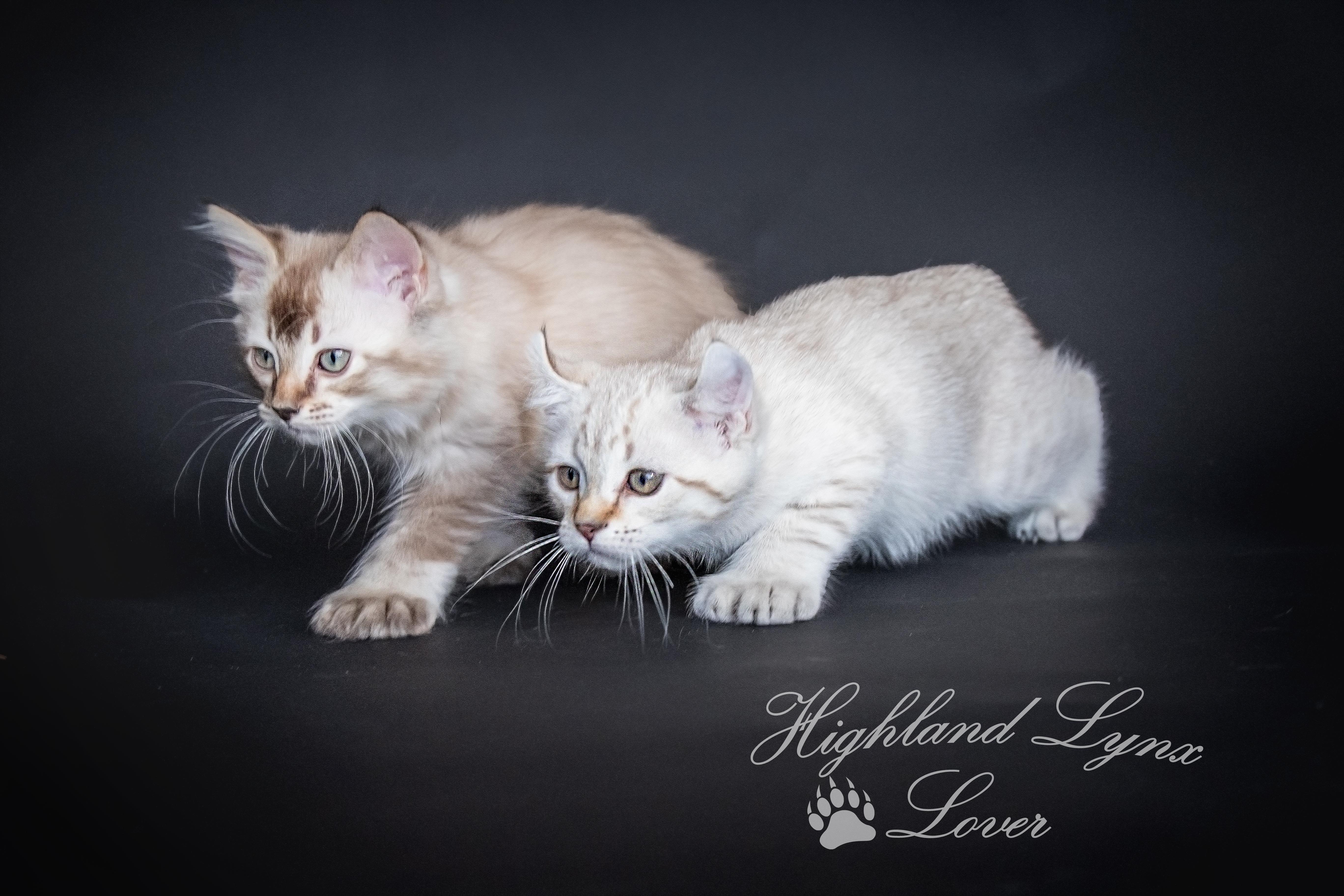 Makao et Luana