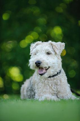 adorable petit chien, dogma