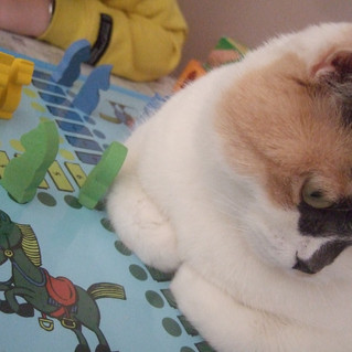 On a testé: confinement/être un chat