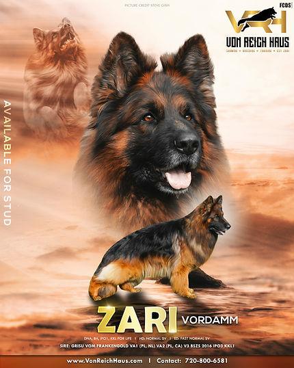 ZARI VORDAMM GSD Stud poster.jpg