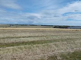 Birch Meadow Holdings