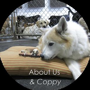 coppy dog 3d model next to dog